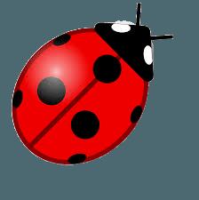 Klein wie ein Marienkäfer